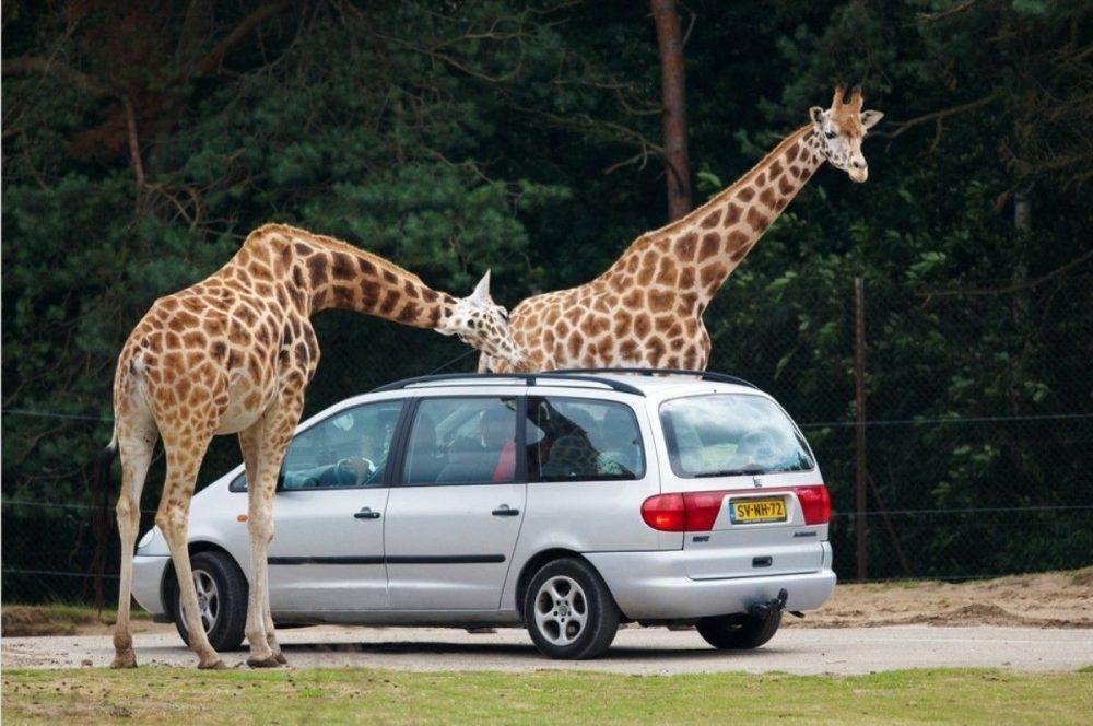 Pombia: sono a rischio gli animali dello Zoo Safari