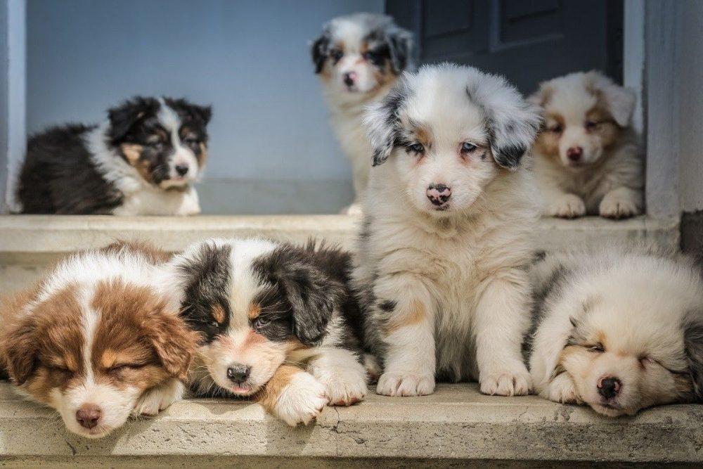 Gallarate: allerta al canile-gattile per i possibili abbandoni a causa del #coronavirus
