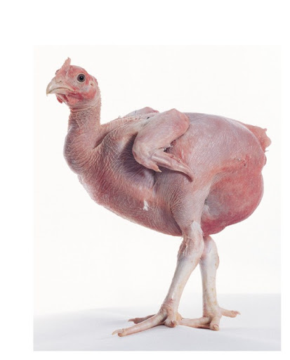 pollo italico